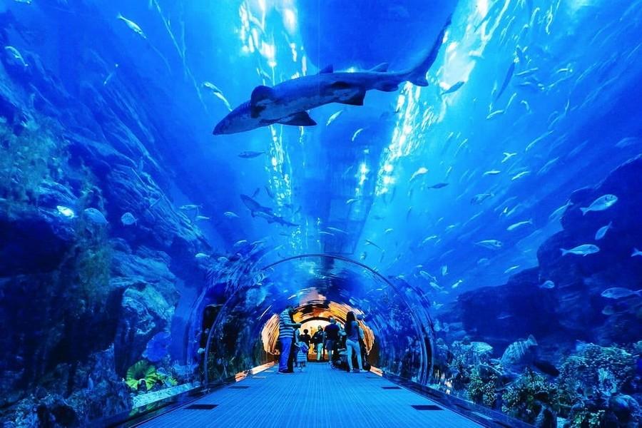 аквариум в дубай молл фото